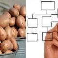 Схема и картофель