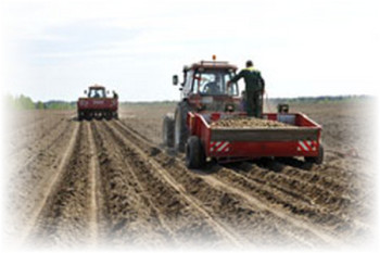 traktor_v_pole