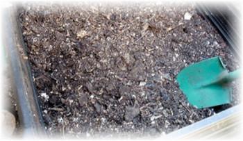 Как посадить репу в открытом грунте правильно: сроки, уход, подготовка