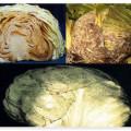 Виды тыквы