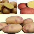 картофель целый и в разрезе