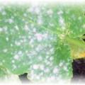 белый налет на листе у огурца