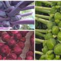 красная фиолетовая и зеленая капуста