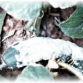 Сгнивающий огурец