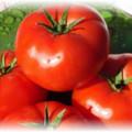 помидоры бобкат