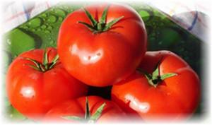 pomidori_bobkat
