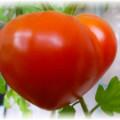 большой томат