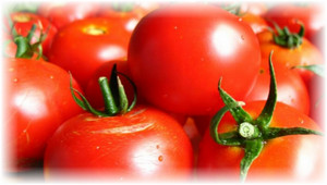 gorst_pomidor