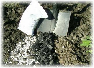 перекапывание земли с золой и фосфором