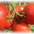 помидоры евпатор