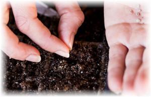 посадка семян в землю