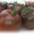 почти черные томаты