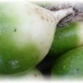 редька зеленая с белым носом