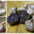 3 вида чеснока