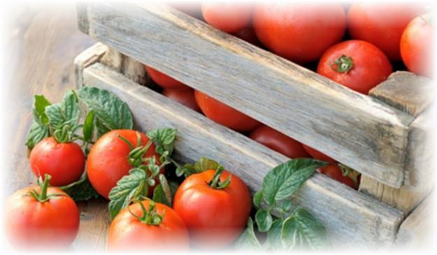 pomidori_v_yashike