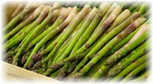 asparagus_v_yashike