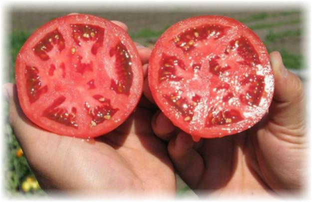 semena_pomidor_na_hranenie