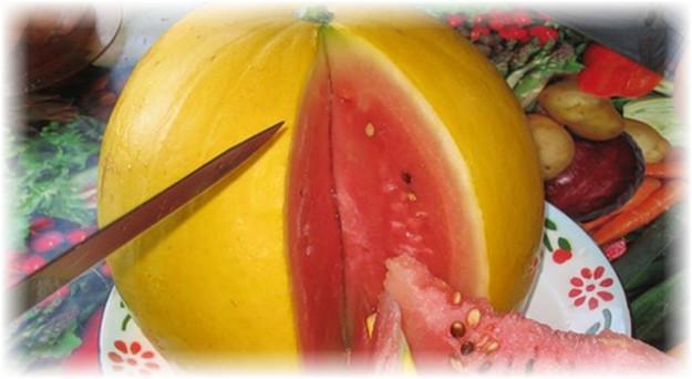 арбуз желтое чудо, кожица которого внешне больше напоминает дыню