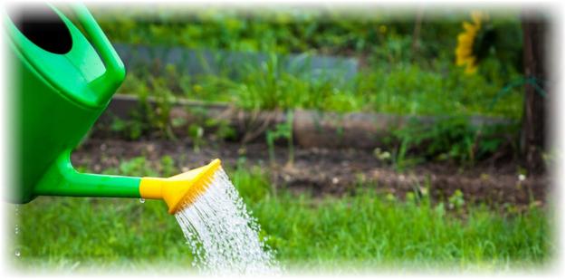 лейка поливает растения