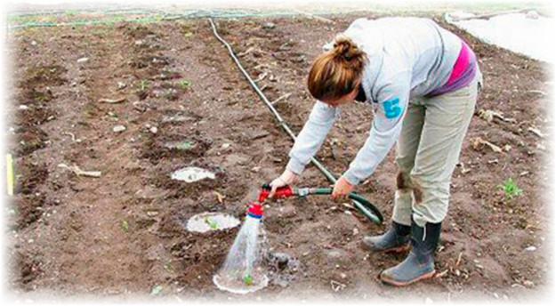 девушка поливает арбуз в огороде