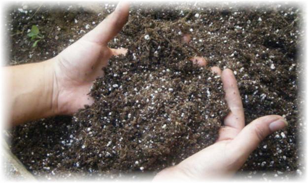 удобрение, соль и калий для арбуза