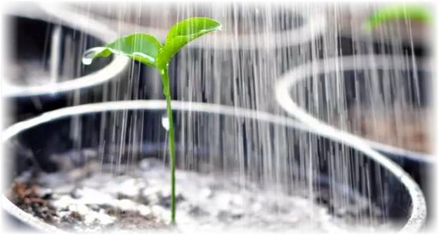 уход за растением дома