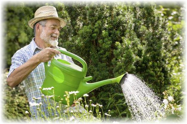 полив груши