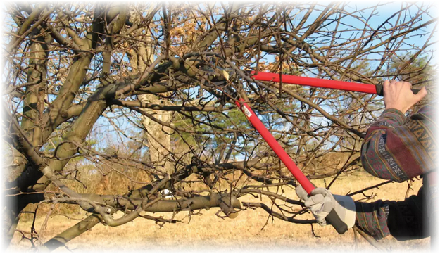 способ обрезки деревьев