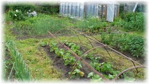 теплица в огороде