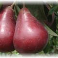 2 груши старкрисмон