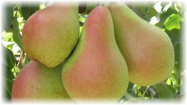 4 плода русской красавицы