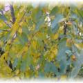 желтоватые листья на дереве