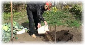 полив яблони весной