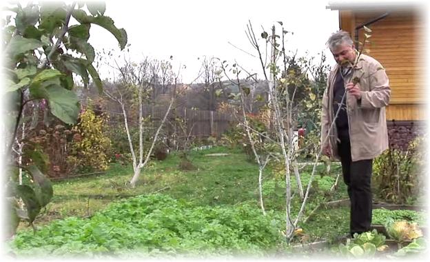 саженец в огороде