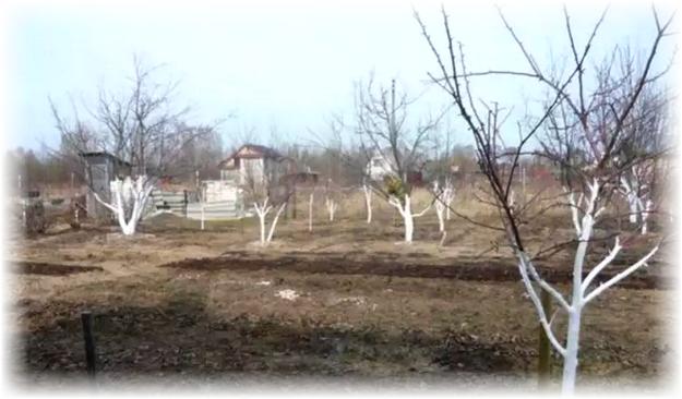 земельный участок весной