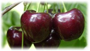 4 большие вишни