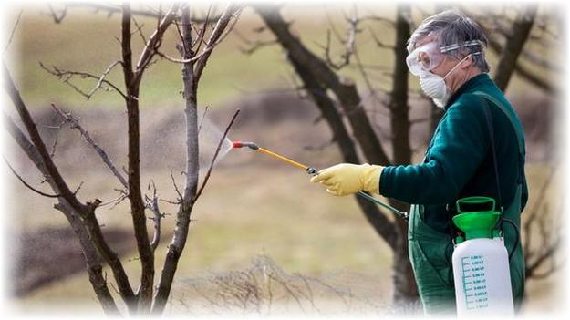 опыление яблони осенью