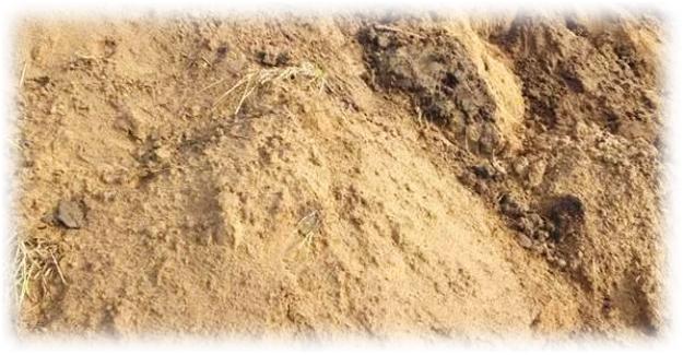 песчаный грунт для вишни