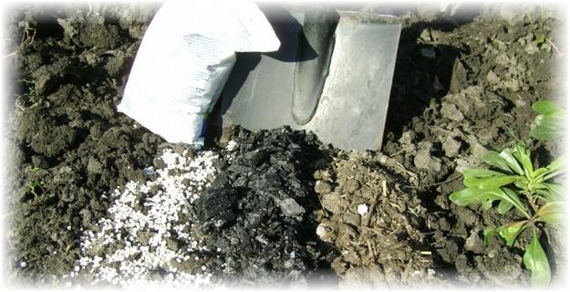 удобрение и уголь на грунте