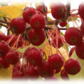 ягодная яблоня