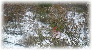 зеленые листья зимой на дереве