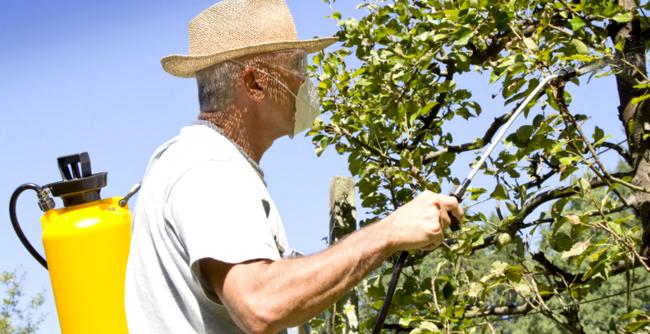 дед обрабатывает яблоню