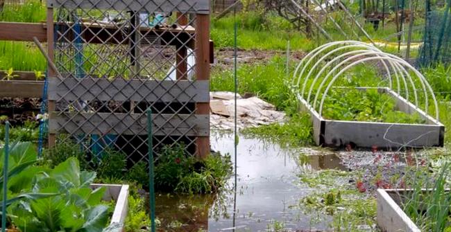 много воды в огороде