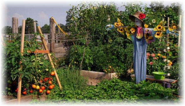 пугало в огороде
