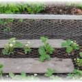 защитная сетка для клубники