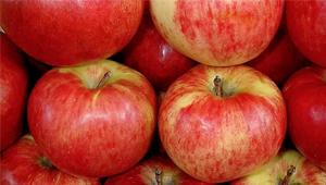 много красных яблок