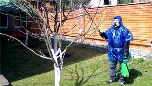 обработка дерева яблони