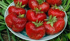 крупные ягоды гиганты