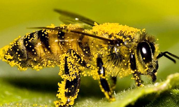 насекомое в пыльце