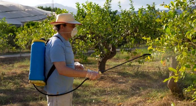 опрыскивание больной вишни